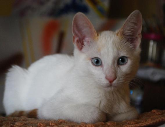 Kantor, el gato de la actriz Trinidad Osorio.