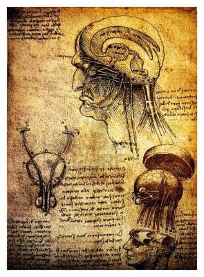 Dibujos anatómicos realizados por Leonardo Da Vinci: un estudio del cerebro humano y el sistema nervioso.
