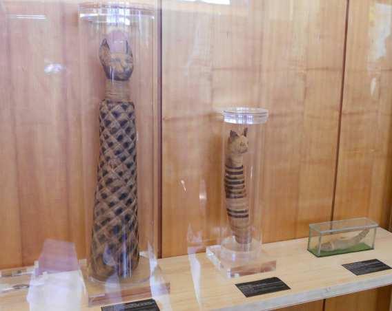 Dos de los gatos momificados que se pueden ver en la exposición. Fotografía de Sergio Jorge.