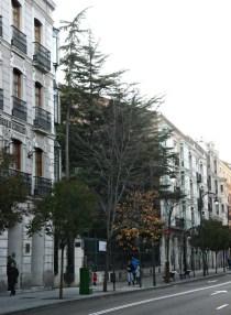 Jardín como vestigio de la trama histórica. / Calle Miguel Íscar. Jardines de la Casa Museo de Cervantes con la calle Rastro. Valladolid. © José Carlos Sanz.