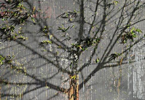 Árbol dibujado con sombras y hojas de bambú. / Ecoterraza. Valladolid. © José Carlos Sanz.