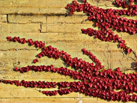 Muro vestido de tapiz rojo. / Cerramiento lateral del Instituto Núñez de Arce al Paseo de Isabel la Católica. Valladolid. © Fotografía: José Carlos Sanz.