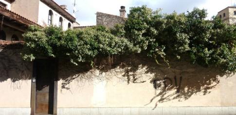 """Trepadora """"retrepándose"""" sobre una tapia. / Calle Trilingüe. Salamanca. © Fotografía: José Carlos Sanz."""