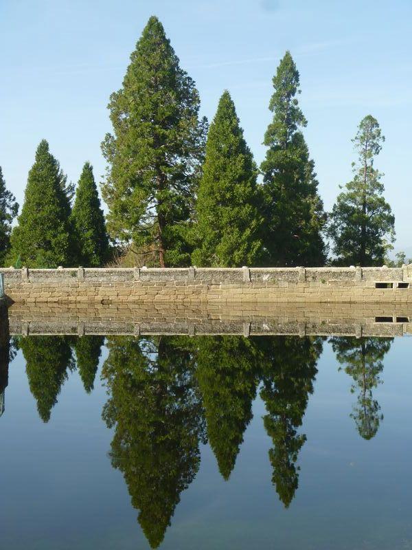 Coníferas reflejadas en el estanque. © Fotografía: José Carlos Sanz Belloso.