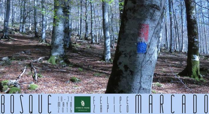 bosque marcado