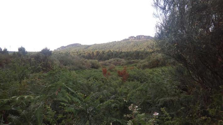 -Paisaje de la comarca de Aliste con la Sierra de la Culebra, al fondo. © Fotografía: Gabriel Vaquero.
