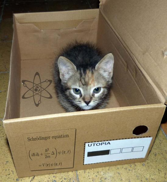 Recreación de la paradoja de Erwin Schrödinger con la gatita Runa.