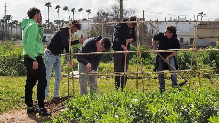 Alumnos de 1º de Formación Profesional  Básica, de Jardinería, preparan la estructura de cañas en el huerto, para enredar las matas de tomates. © Fotografía: Ana Escalera.