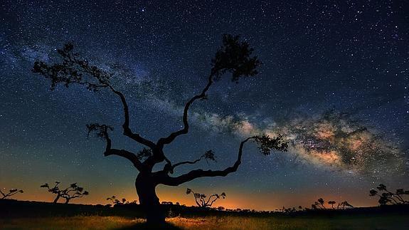 Silueta de un roble contra un cielo en el que puede apreciarse la Vía Láctea. © Fotografía: César Vega (Efe).