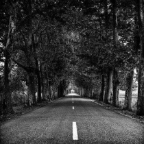 Carretera de Gradefes. © Fotografía: José Ramón Vega.