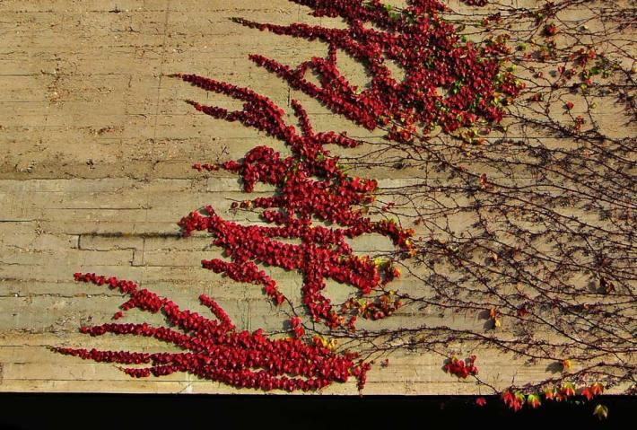 """""""Escrito en un muro"""". © Ilustración: José Carlos Sanz Belloso."""