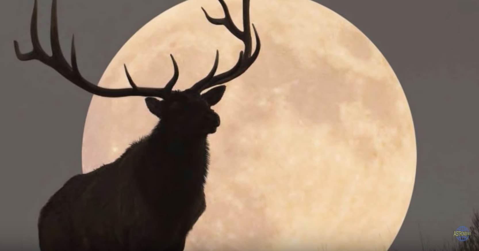 1 luna de truenokokotriso