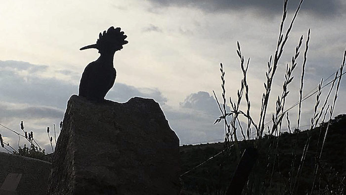 pajaros-romeria-paradilla-leon