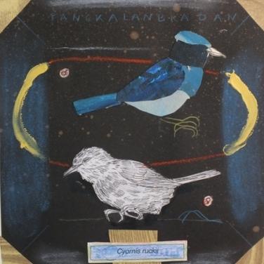 1 - José Luis Viñas - Sexta Extinción - Cyornis ruckii