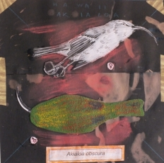 2 - José Luis Viñas - Sexta Extinción - Akialoa obscura FCAYC
