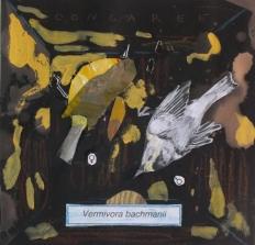 3 - José Luis Viñas - Sexta Extinción - Vermivora bachmanii 1