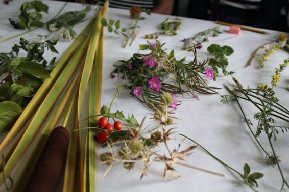 Herbarium 2016. Septiembre. Lorena Lozano y Pilar Diez. FCAYC.