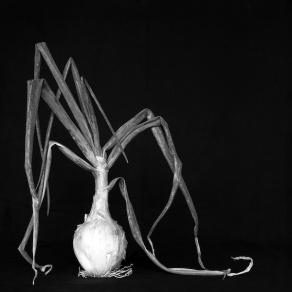 """""""Naturaleza muerta"""", fotografía de Julia González Liébana, ganadora del VI concurso."""