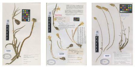 'Herbarium'. Fundación Cerezales.